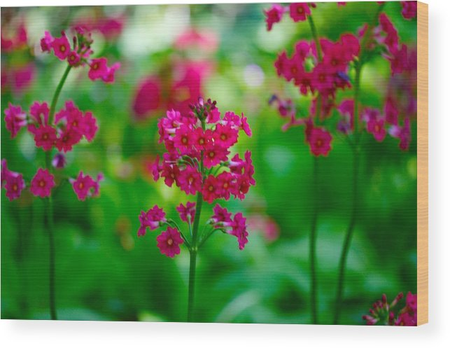 Floral Wood Print featuring the photograph Purple Flowers by Paul Kloschinsky