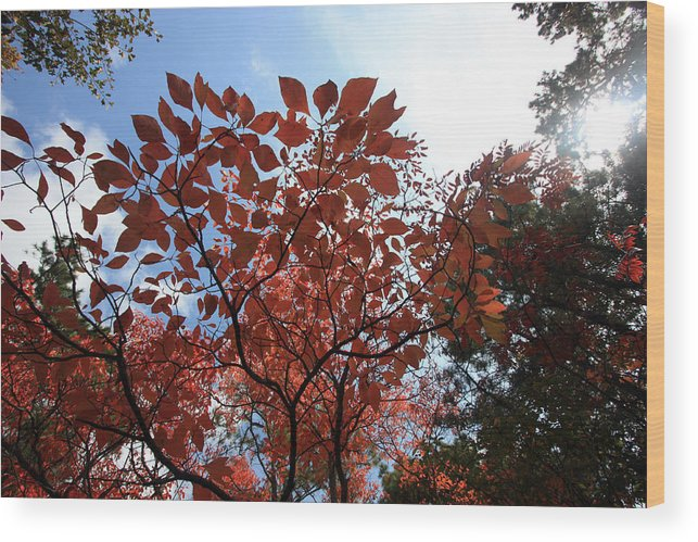 Trees Wood Print featuring the photograph Reaching For The Sun by Mary Haber