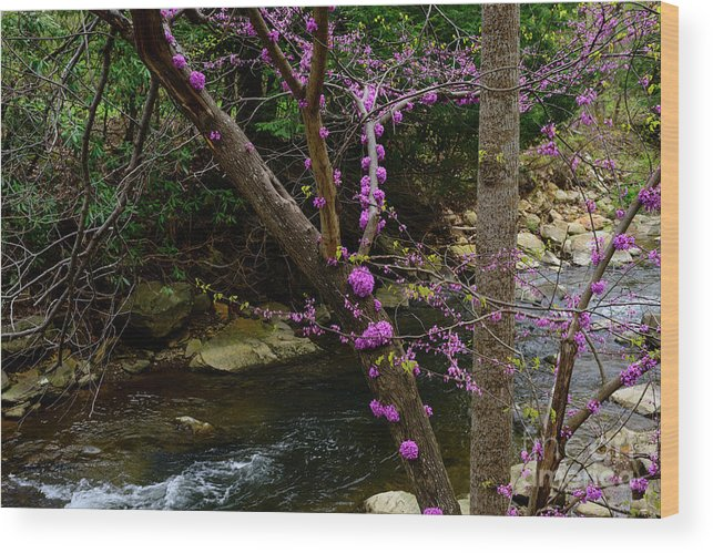 Spring Wood Print featuring the photograph Redbud And River by Thomas R Fletcher