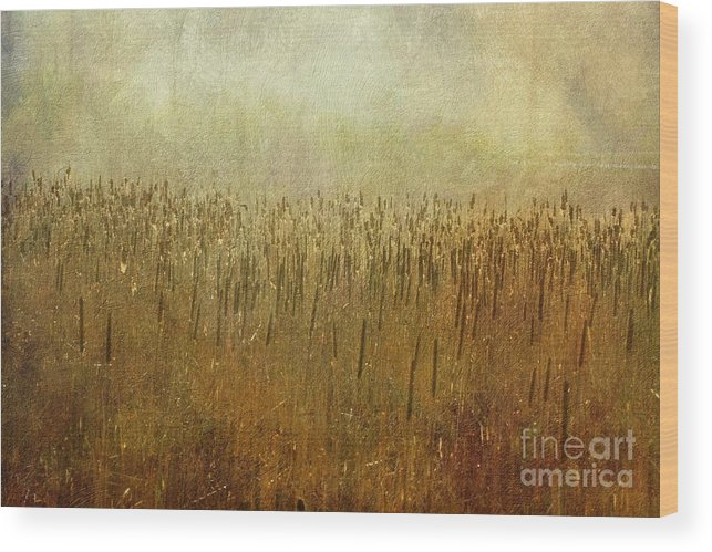 Marsh Wood Print featuring the photograph The Marsh by Mary Machare