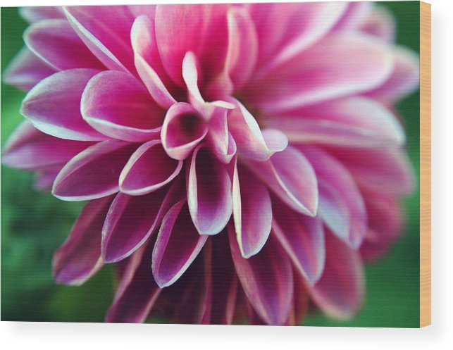 Flower Wood Print featuring the photograph Untitled by Kathy Schumann