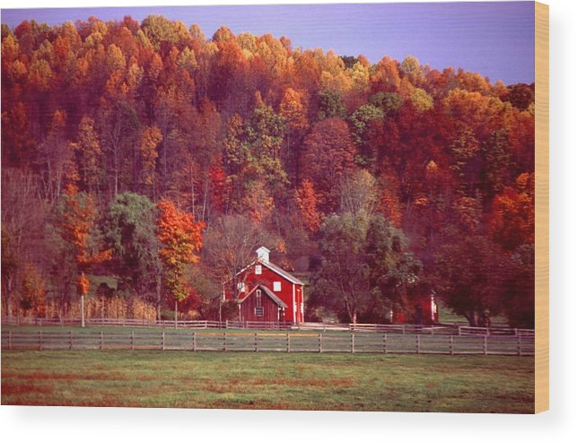 Autumn Wood Print featuring the photograph 102701-16 by Mike Davis