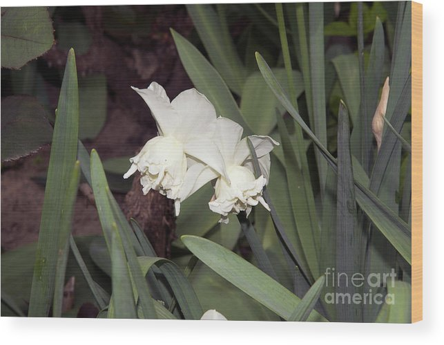Flowers Wood Print featuring the photograph Spring Flowers by Elvira Ladocki
