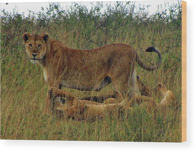 Tanzania Wood Print featuring the photograph Tanzania by Paul James Bannerman