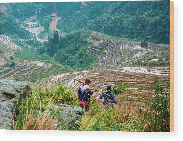 Terrace Wood Print featuring the photograph Longji Terraced Fields Scenery by Carl Ning