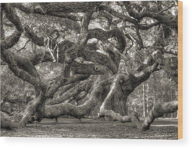 Angel Oak Wood Print featuring the photograph Angel Oak Live Oak Tree by Dustin K Ryan