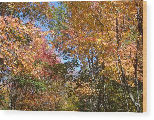 Landscape Wood Print featuring the photograph Autumn In Ma by Victoria Wang