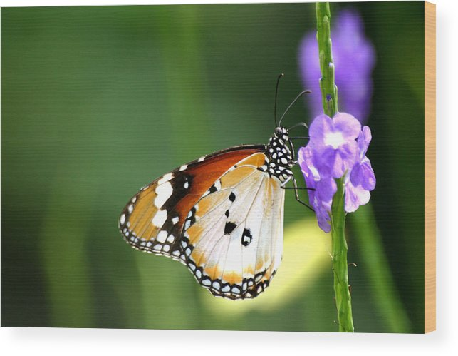 Insect Wood Print featuring the photograph Butterfly by Mark Mah