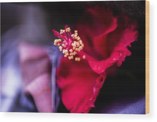 Architecture Wood Print featuring the photograph Hibiscus Flower by Jijo George