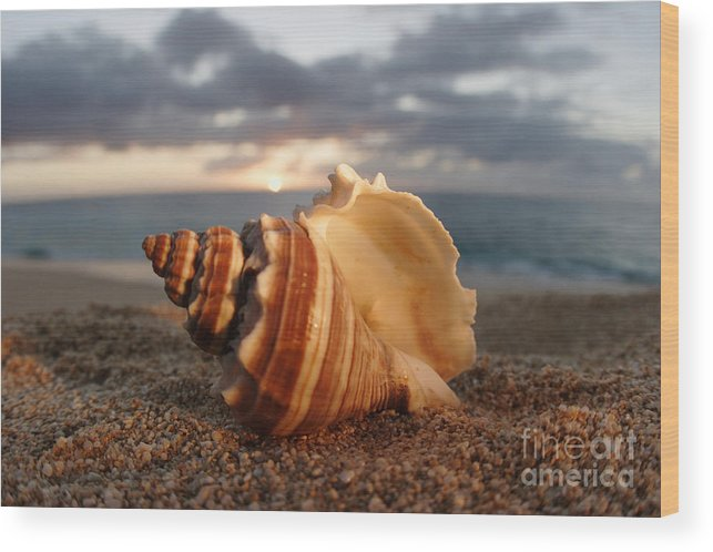 Background Wood Print featuring the photograph North Shore Seashell by Vince Cavataio - Printscapes