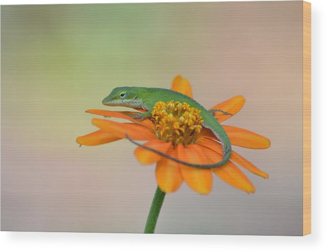 Lizard Wood Print featuring the photograph Sitting Pretty by Kathy Gibbons