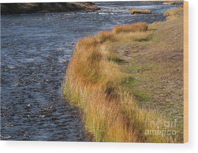 Firehole River Wood Print featuring the photograph Blue And Gold by Bob Phillips