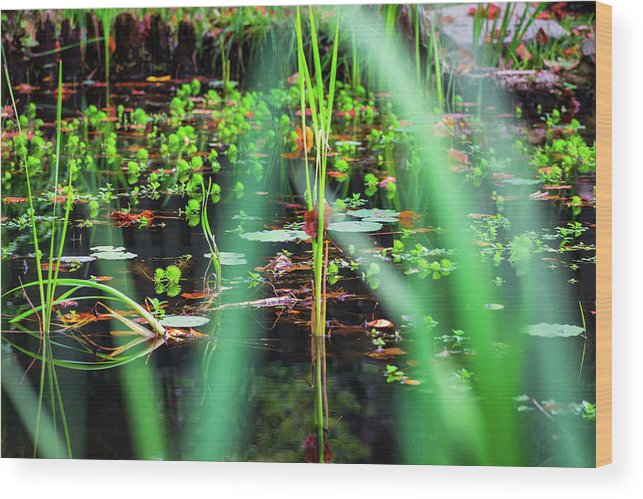 Water Wood Print featuring the photograph Japanese Garden by Jeff Chapman