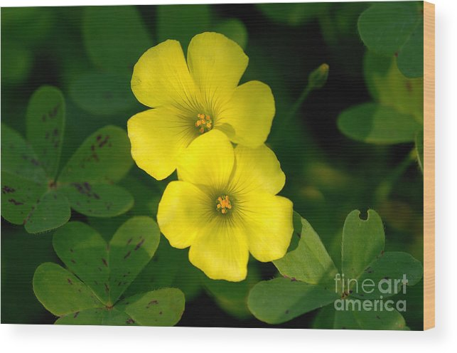 Flowers Wood Print featuring the photograph Flowers by Marc Bittan