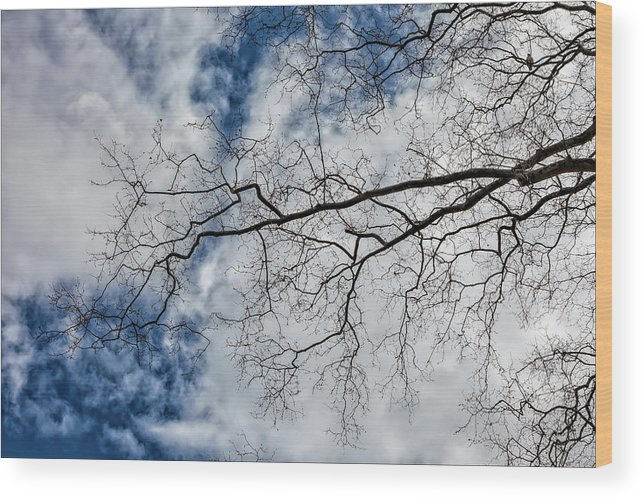 Trees Wood Print featuring the photograph Trees Sky And Clouds by Robert Ullmann