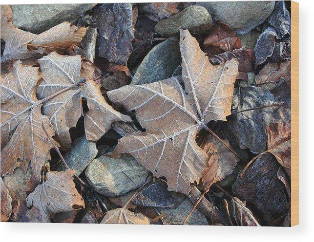Leaf Wood Print featuring the photograph Untitled by Kathy Schumann