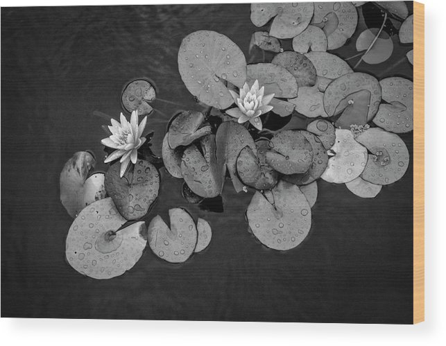 Lily Pad Wood Print featuring the photograph 4425- Lily Pad Black And White by David Lange