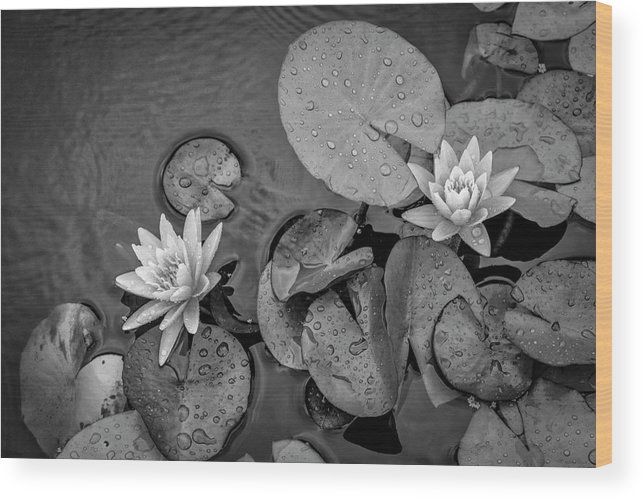 Lily Pad Wood Print featuring the photograph 4432- Lily Pads Black And White by David Lange