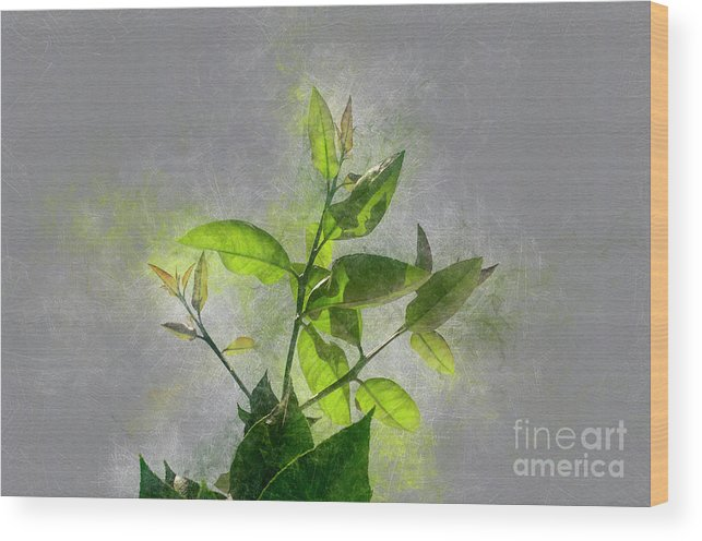 Beauty Wood Print featuring the photograph Fresh Growth Of Healthy Green Leafs by Humourous Quotes