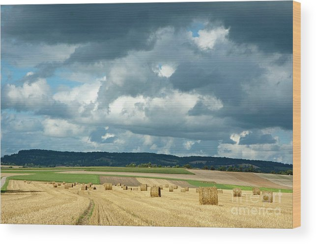 Agricultural Wood Print featuring the photograph Hay Bales In Harvested Corn Field by Sami Sarkis