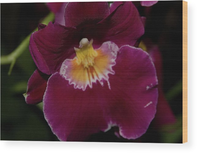 Wood Print featuring the photograph Orchid by Laurie Prentice