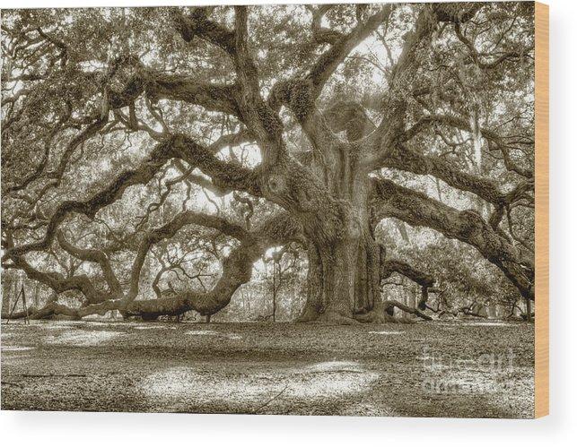 Live Oak Wood Print featuring the photograph Angel Oak Live Oak Tree by Dustin K Ryan