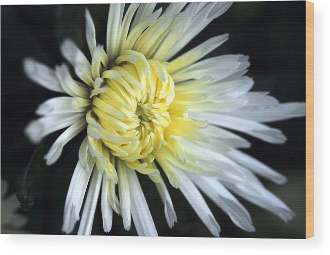 Nature Wood Print featuring the photograph Untitled by Paul Gavin