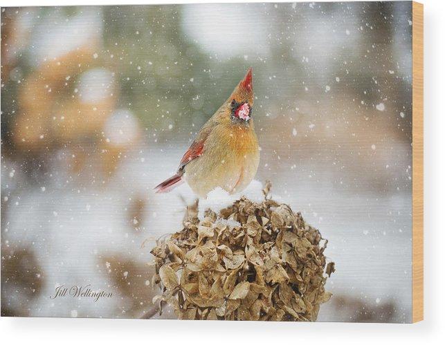 Female Cardinal Wood Print featuring the digital art Winter Birds by Jill Wellington