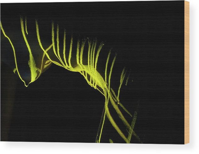 Nude Wood Print featuring the photograph Liquid Latex by Pavel Jelinek