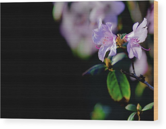 Spring Wood Print featuring the photograph Spring by Hristo Shanov