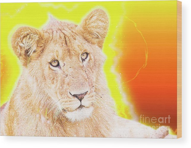 Lion Wood Print featuring the photograph lioness Masai Mara, Kenya by Humorous Quotes