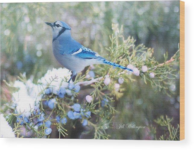Blue Jay Wood Print featuring the digital art Winter Birds by Jill Wellington