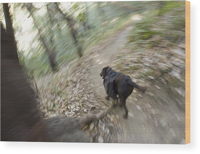Blurred Motion Wood Print featuring the photograph A Dog Backpacking On Pine Ridge Trail by Rich Reid