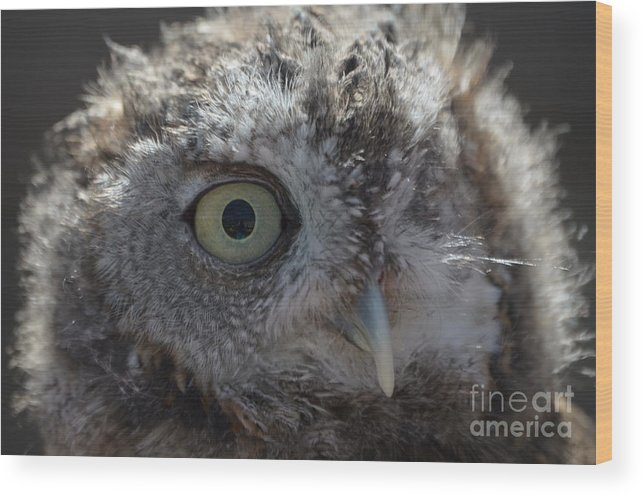 Rescue Wood Print featuring the photograph A Eye On You by Jodie Sims