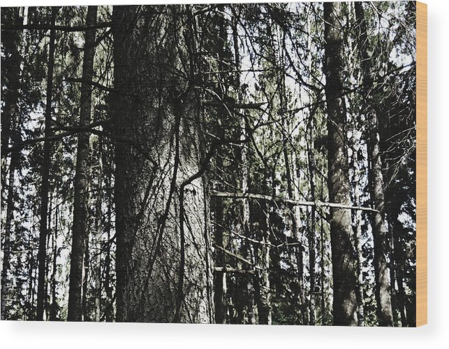A Wood Print featuring the photograph A Forest Walk by Tinto Designs