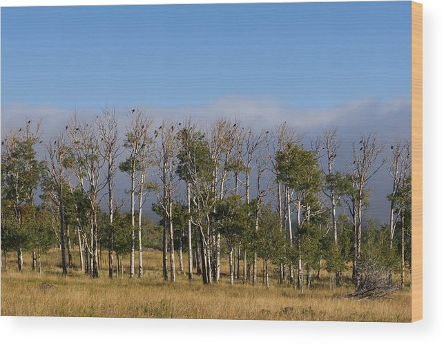 Colorado Photographs Wood Print featuring the photograph A Gathering Of Crows by Hulda Benson