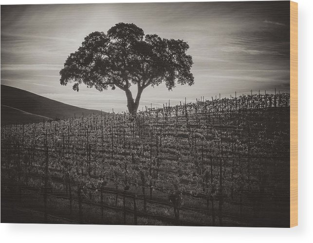 Paso Robles Wood Print featuring the photograph A Little More Quiet by Joseph Smith