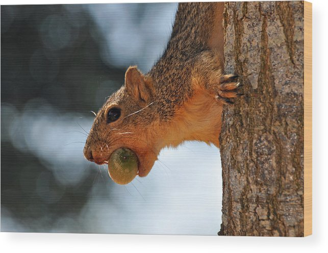 Teresa Blanton Wood Print featuring the photograph A Mouthful by Teresa Blanton