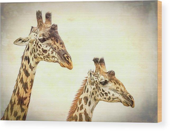 Giraffe Wood Print featuring the photograph A Perfect Pair- Masai Giraffe by Cindi Alvarado
