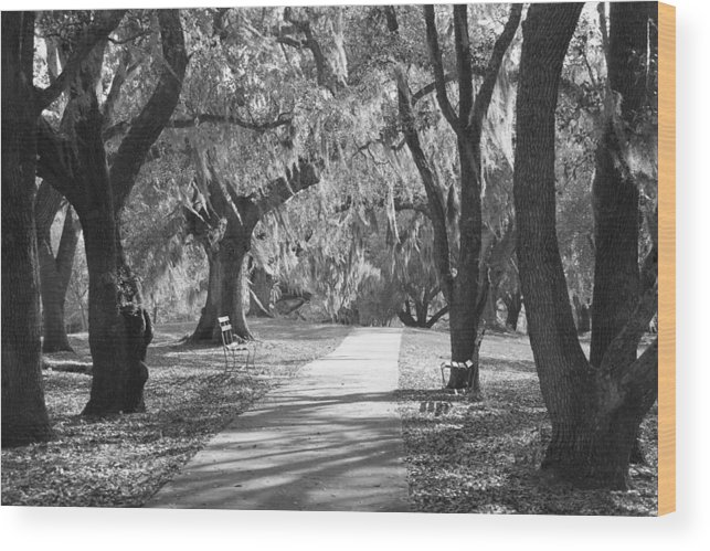 Black And White Wood Print featuring the photograph A Place For Contemplation - Black And White by Suzanne Gaff