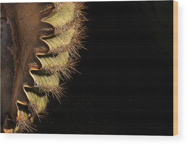 Browns Ranch Wood Print featuring the photograph A Saguaro Section by Dennis Eckel