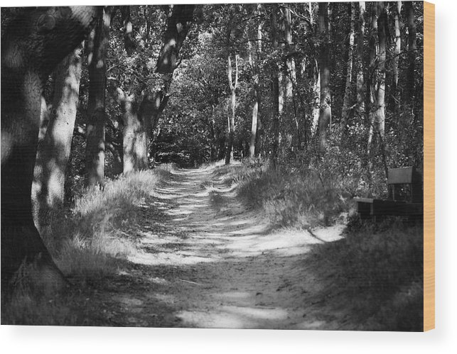 Deutschland Wood Print featuring the photograph A Walk In The Woods by Edward Myers