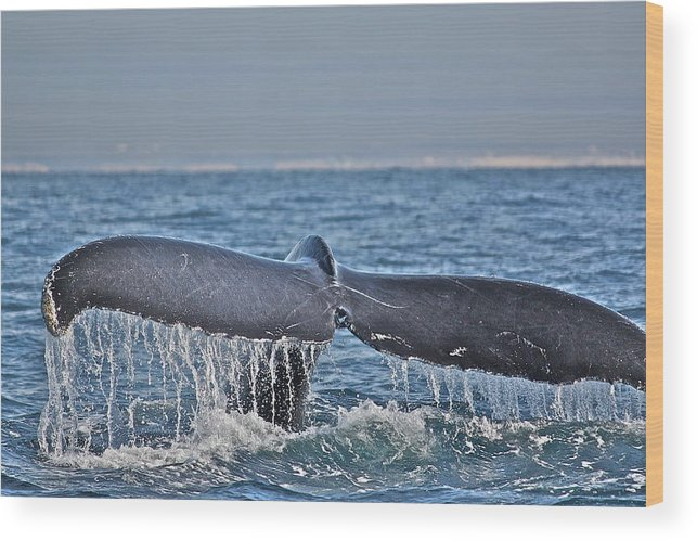 Whale Wood Print featuring the photograph A Whale Of A Tale by Diana Hatcher