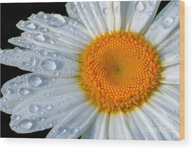 Flowers Wood Print featuring the photograph After The Rain by Neil Doren