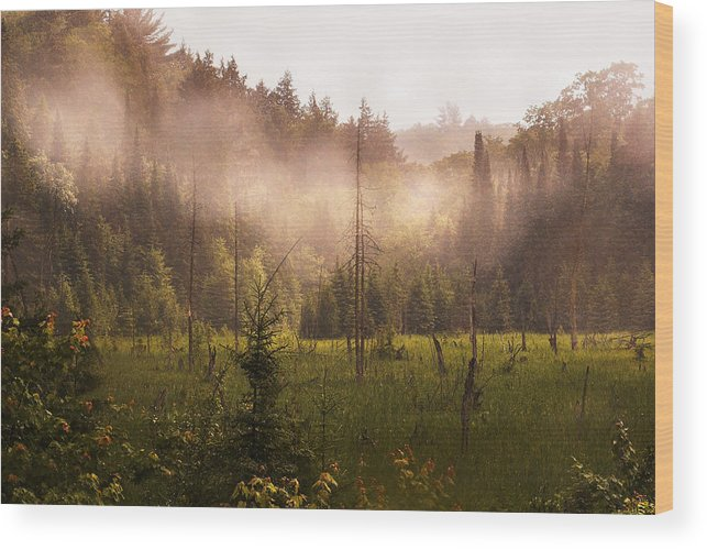 Algonquin Park Wood Print featuring the photograph Afternoon Mist by Linda McRae