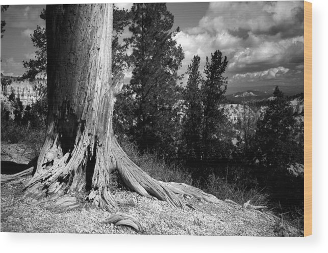 bryce Canyon Wood Print featuring the photograph All This Time by Mike Irwin