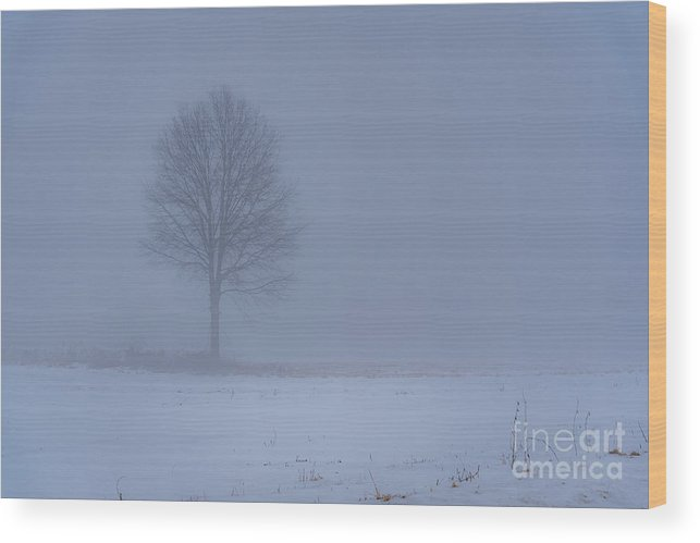 Tree Mist Fog Winter Snow Dull Morning Ohio Wood Print featuring the photograph Alone In The Mist by Darren Walker