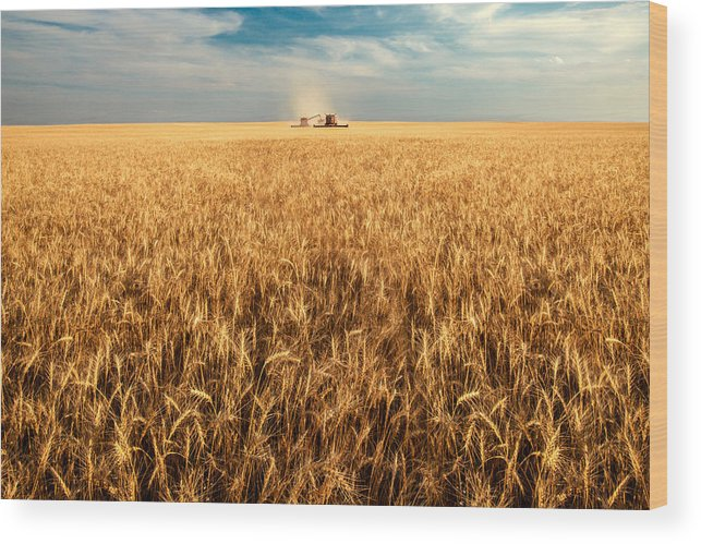 Two Wood Print featuring the photograph America's Breadbasket by Todd Klassy