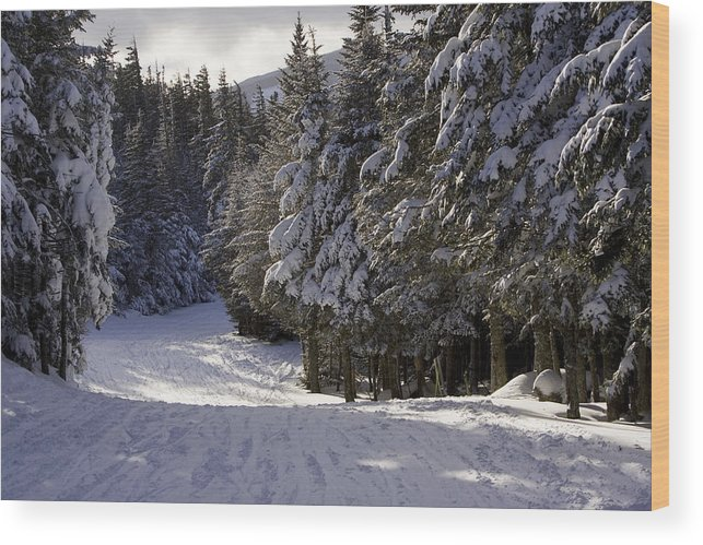 Scenic Views Wood Print featuring the photograph An Alpine Ski Trail On Wildcat Mountain by Tim Laman