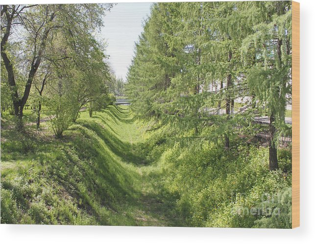 Ditch Wood Print featuring the photograph Ancient Ditch by Evgeny Pisarev